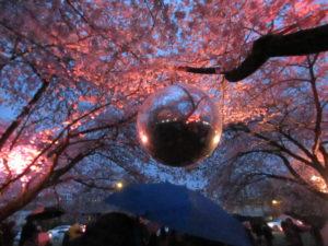 Sakura Illuminations 2018